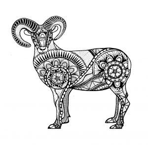 Zentangle drawing of a ram