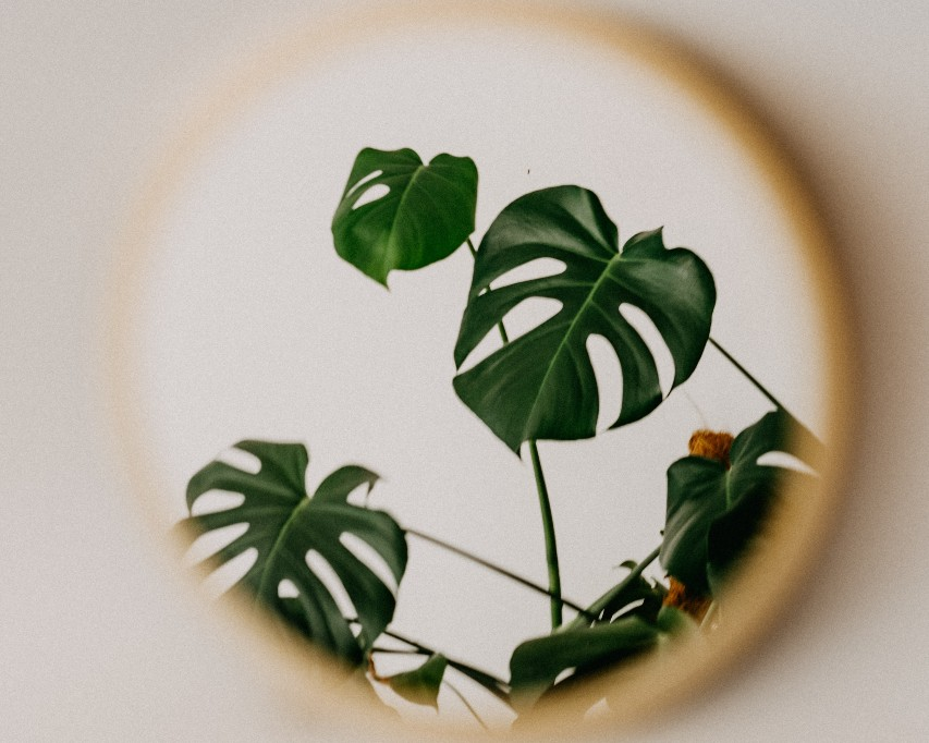 A wall mirror reflecting part of a houseplant